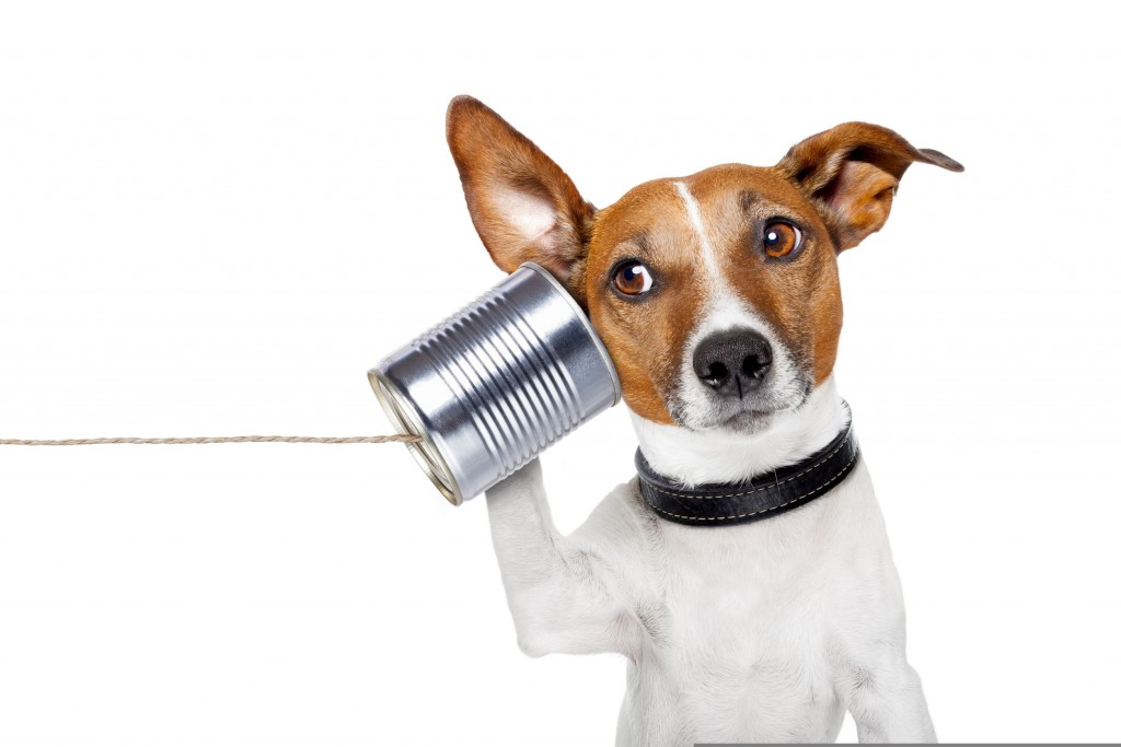 Contact us-dog on the phone using a can